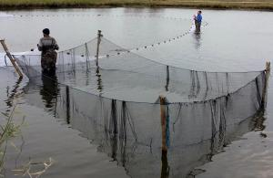 obor pescaresc 1